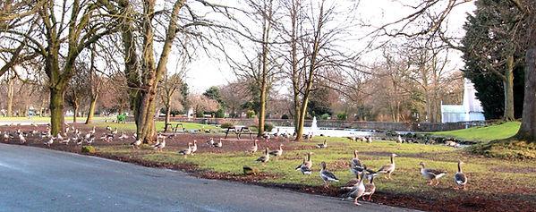 Park life in Pearson Park.jpg