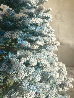 Close Up on 'Frozen' Flocked Tree