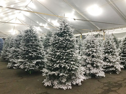 Flocked Trees on Deck