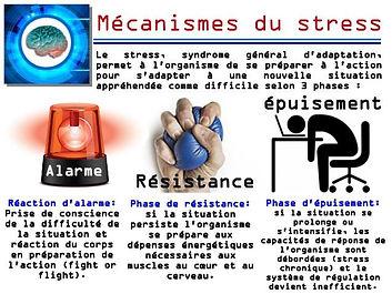 Mécanismes_du_stress.jpg