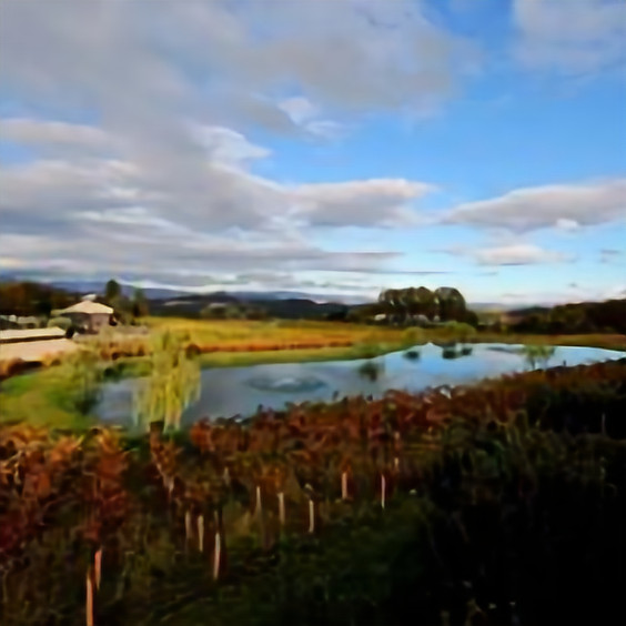 Autumn Festival - Boatique Winery