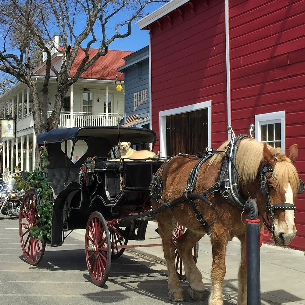 Horse & Buggy ride outside Blue Wing Saloon