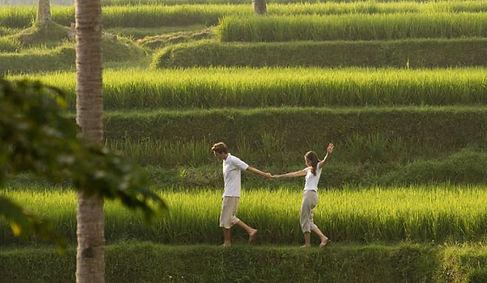 Paddy Walks near Heaven in Bali