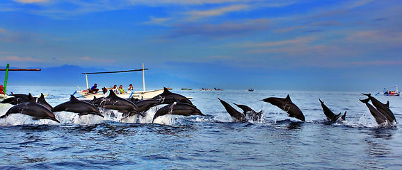 Dolphins near Heaven inBali