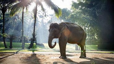 Elephant Park near Heaven in Bali