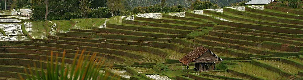 Bali Paddy Terraces