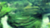 Rice Terraces near Heaven in Bali