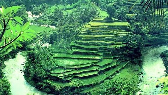 Rice Terraces near Heaven in Bali