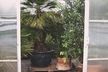 Pflanzen drinnen überwintern