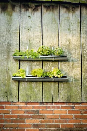 Vertikaler Garten aus Regenrinnen