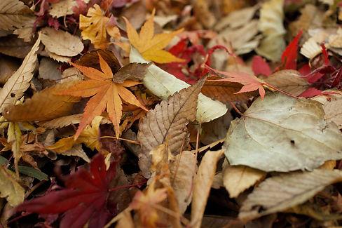 FAG_Herbst_2.jpg