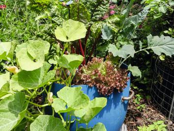 Gemüse anbauen auf kleinem Raum