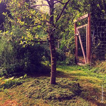 Rasenschnitt im Garten