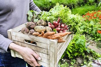 Gemüse – wie lagern?