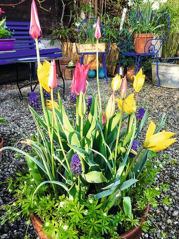 Frühjahrsblüher für Balkon und Terrasse