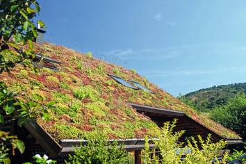 Mehr Lebensqualität mit Dachbegrünung