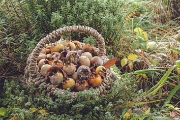 Permakultur-Lerngarten