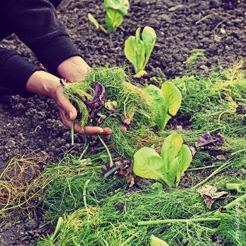 Flächenkompostierung oder Kompostsilo?
