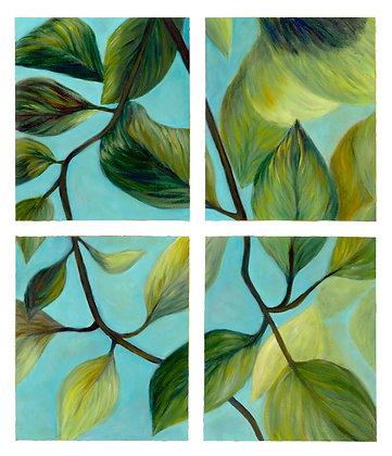 Leaves in Window