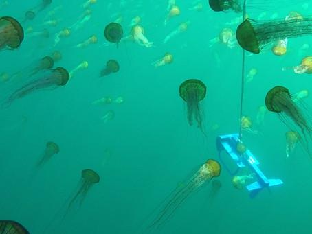 BioSonics Flying Through a Nettle Patch