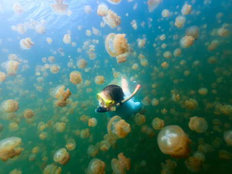 Jellyfish Make Good Subjects for Study with Scientific Echosounders