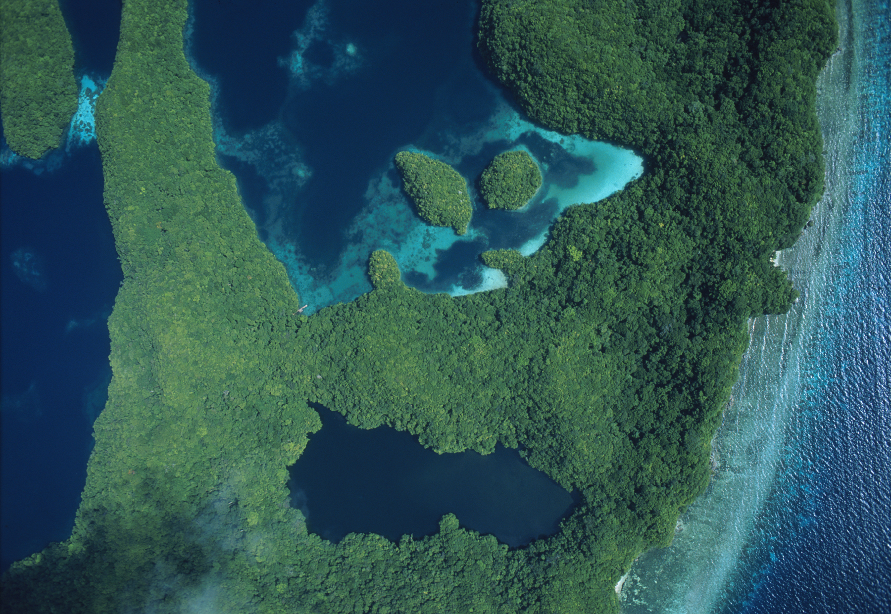 Aerial View of Jellyfish Lake