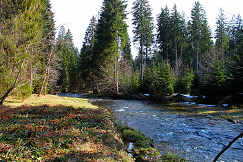 Wildwasser Bayerischer Wald Großer Regen