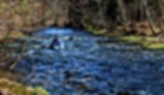 Wildwasser Bayerischer Wald