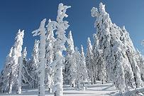 Schneeschuhwandern Bayern, Schneeschuhwandern Bayerischer Wald, Schneeschuhwandern Bayern, Schneeschuhwandern