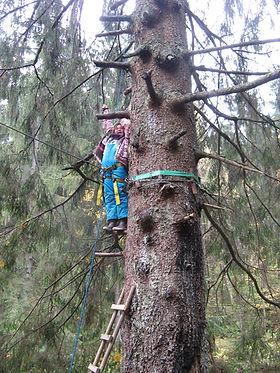 Campingplatz Bayerischer Wald