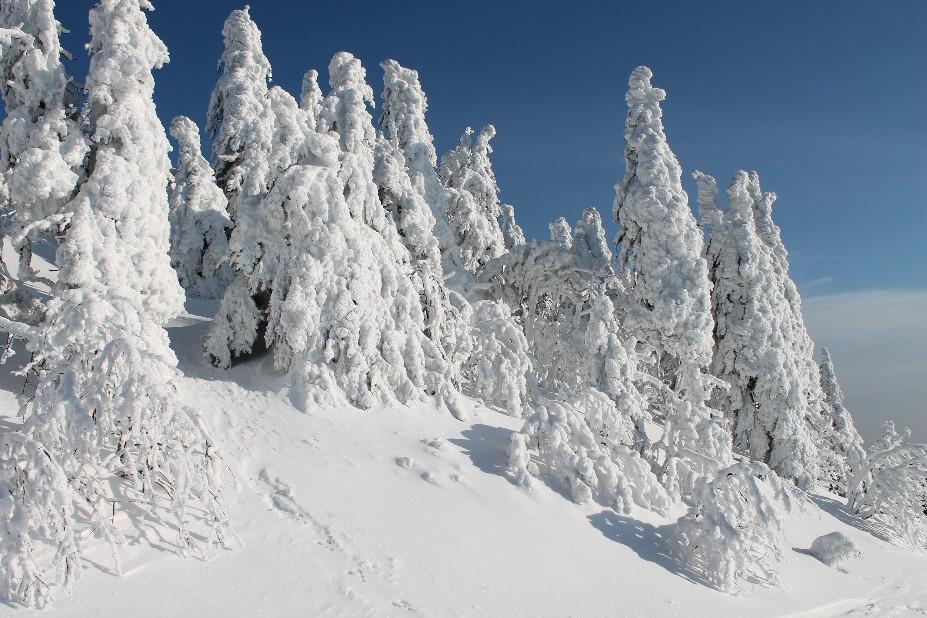 Schneeschuhwandern Bayerischer Wald / BohemiaTours - Adventure
