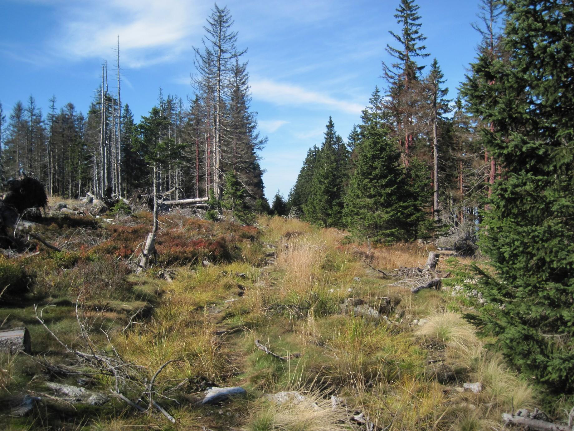 Der Wildnis Trail