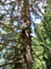 Team Events in Bayern / Bayerischer Wald. Wir organisieren ihre Firmen Events im Bayerischer Wald.  Teambuilding , Junggesellenabschied , Geburtstage , Vereinsausflug , Incentives Bayern . Das Programm von Bohemiatours bietet ihnen zahlreiche Möglichkeiten