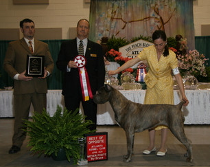 Best of Opposite at CCAA National Show