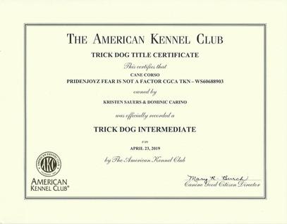 Turnout AKC TKI Certificate.jpg