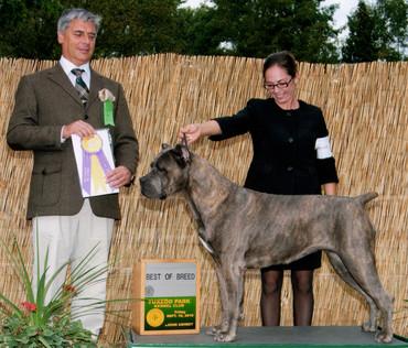 Best of Breed under judge Tamas Jakkel