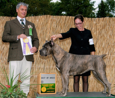 Best of Breed under judge Tamas Jakkel
