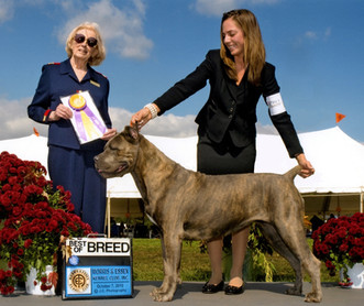 Glow first Best of Breed at Morris & Essex