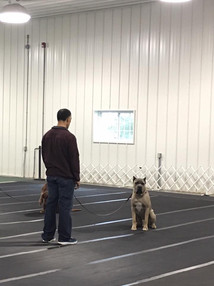 Practicing obedience