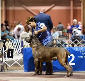 Wally at Harrisburg dog show