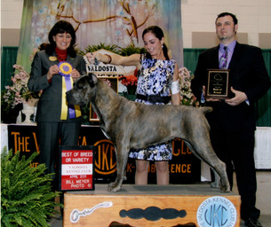 Best of Breed at CCAA Regional Specialty