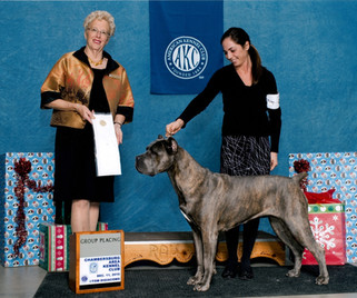 Glow taking AKC Group Fourth placement
