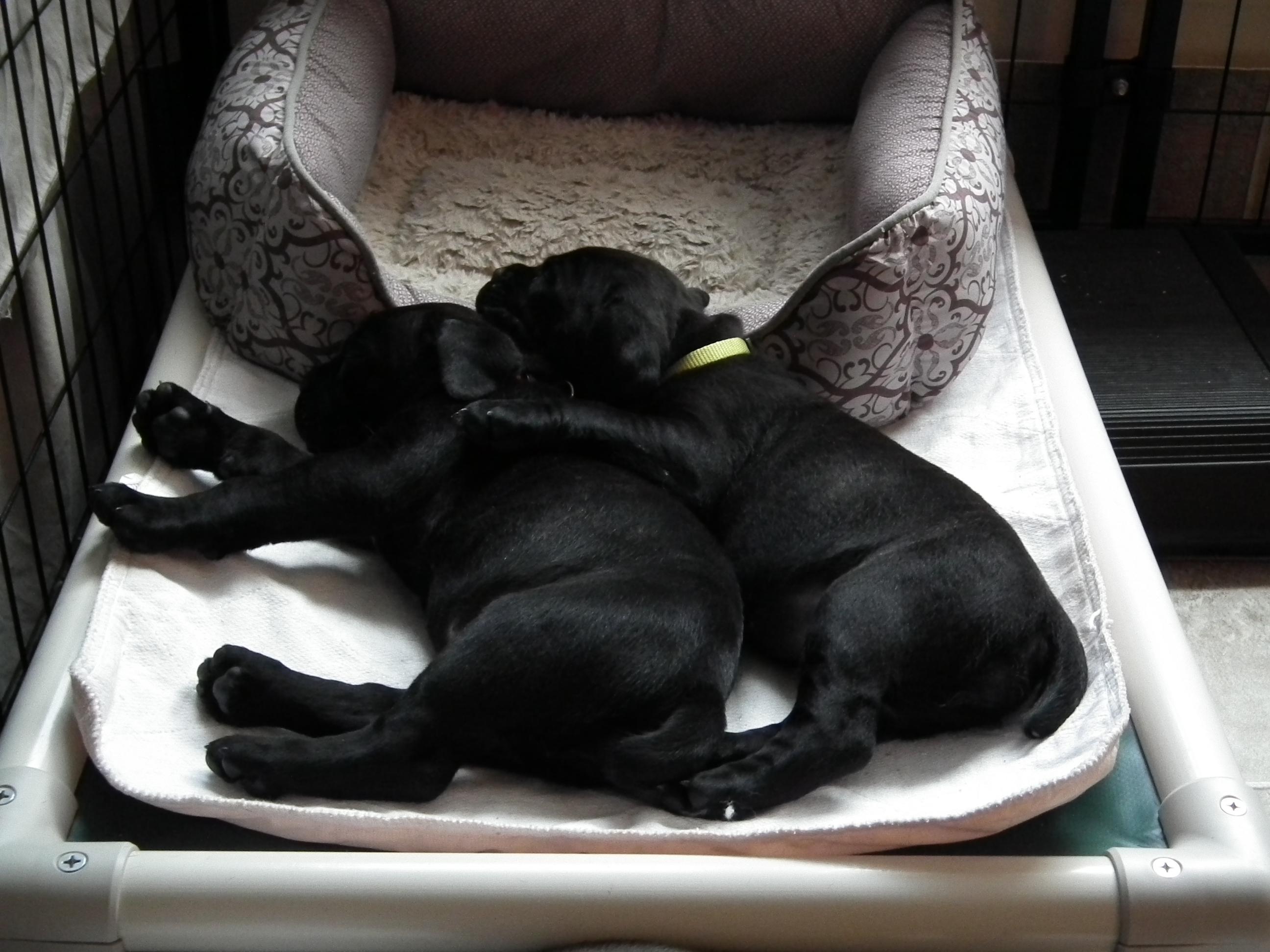 Sisters cuddling