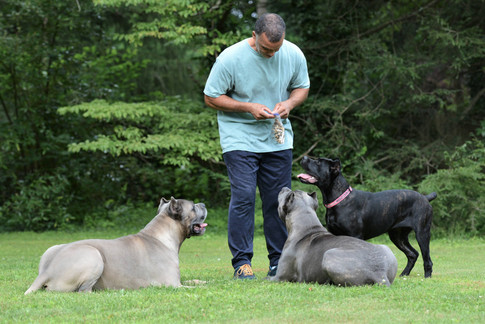 Dominic and the dogs.jpg