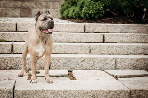 Winna on the steps