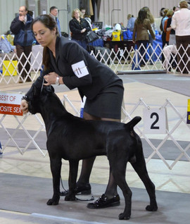 Vullo at the dog show