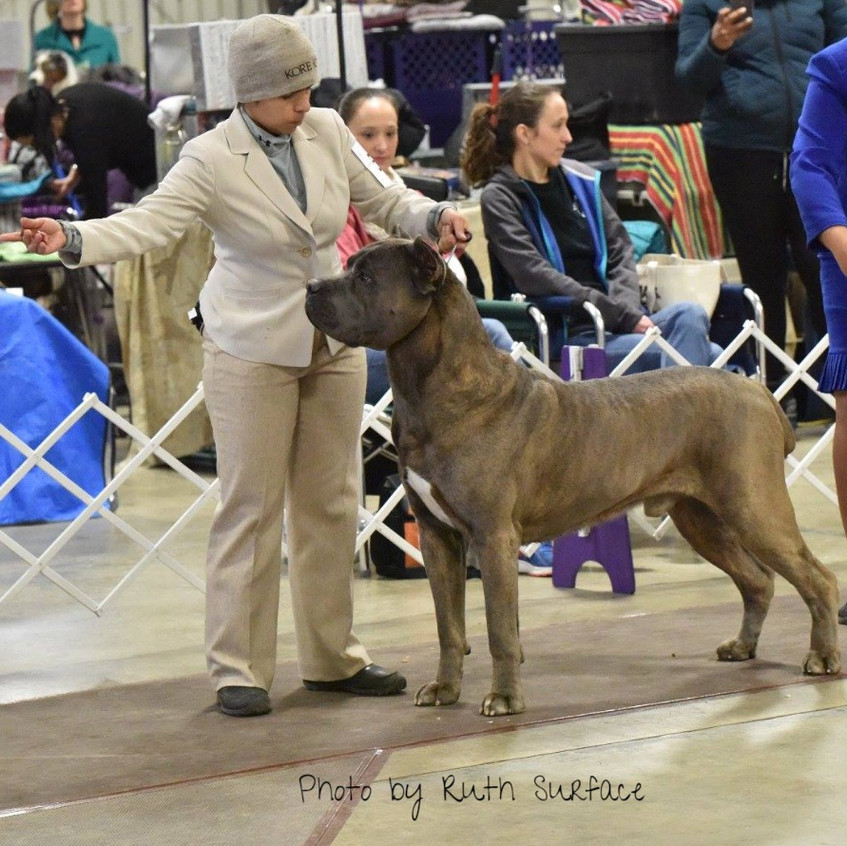 Wally at West Friendship shows taking Best of Breed