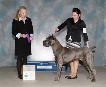 MA Dog Show Pic.jpg