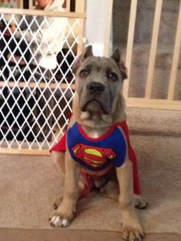 Super Winna on Halloween