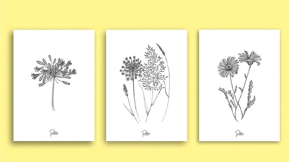 Cartes Florales à encadrer